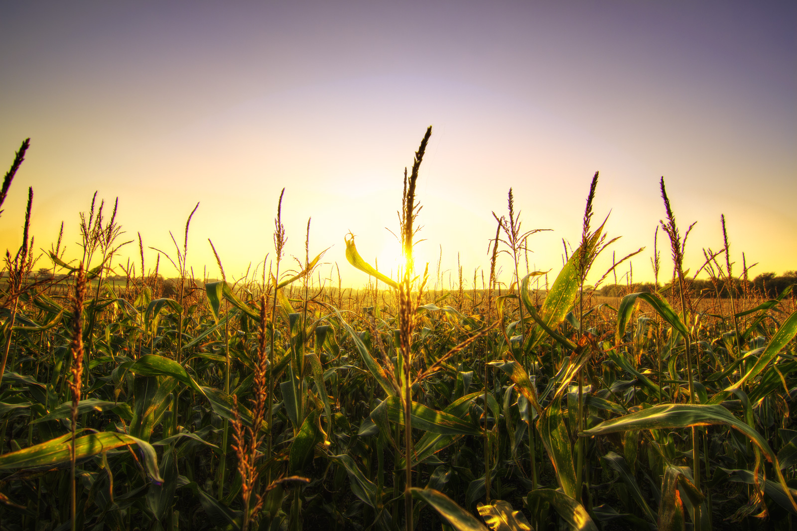 OETA Building Your Agricultural Network | Ohio Environmental